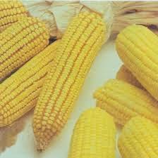 Beneficios Salud del Maiz