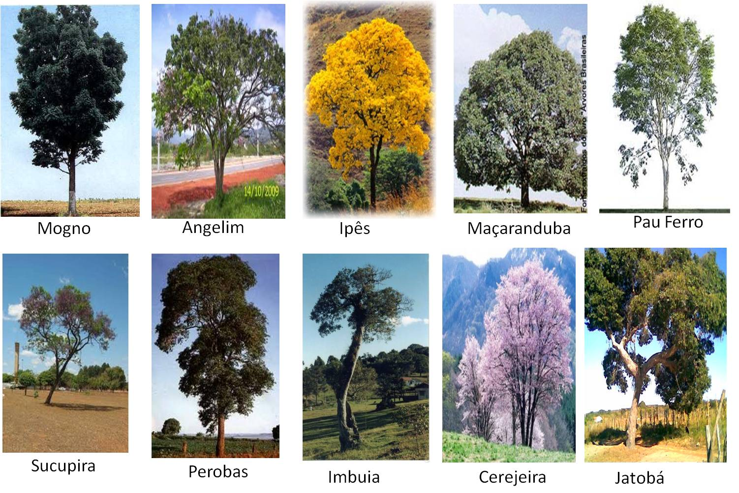 nosso país brasil segue imagens de algumas árvores desmatadas para  #B17C1A 1502x1003