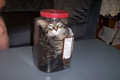 [Image: cat+in+a+jar.jpg]