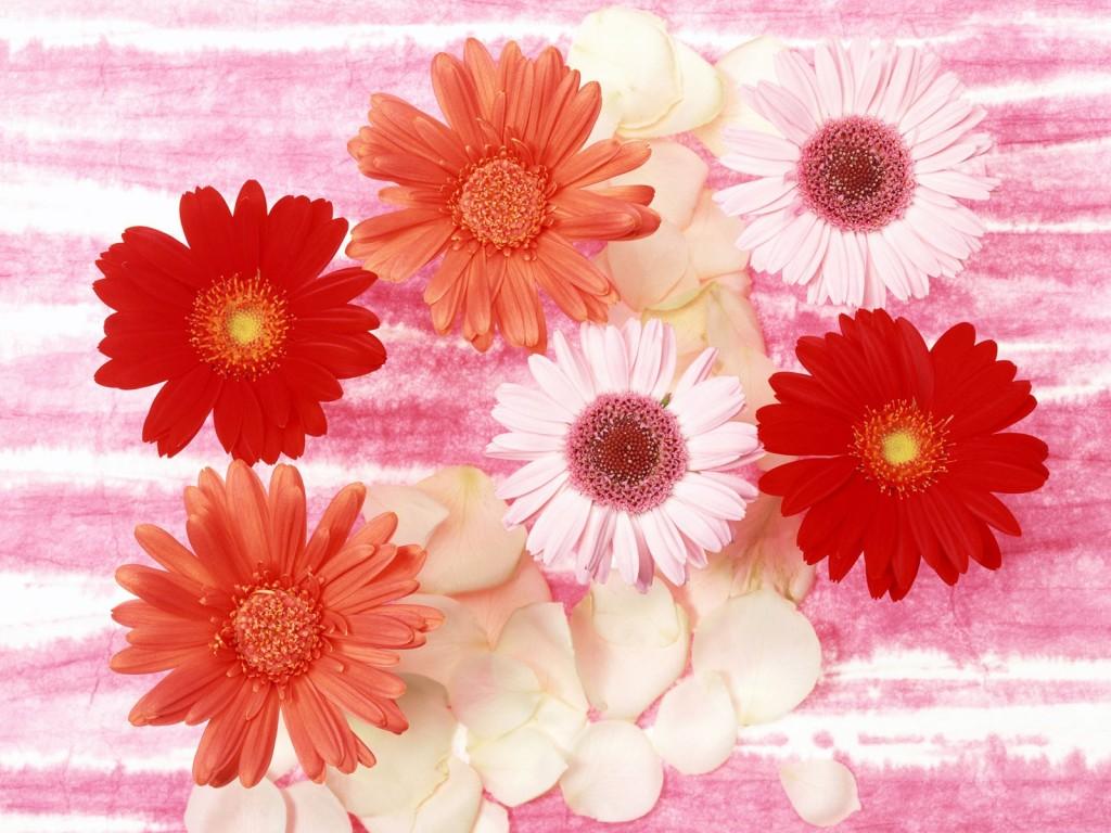 International Womens Day Beautiful Flowers At My Girlfriend 014484