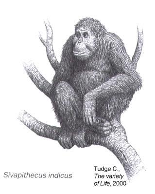 hominidos prehistoricos Sivapirhecus