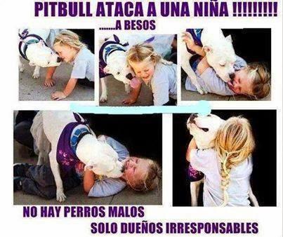 PitBull ataca !!!!!
