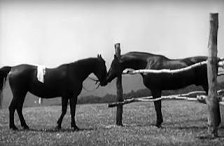 Fotograma que muestra al caballo de Eva con su ropa encima. El caballo se acerca a una yegua que parece gustarle