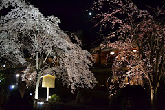 Cherry Blossoms with Full Moon