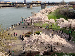 Tom McCall Waterfront Park Cherry Trees