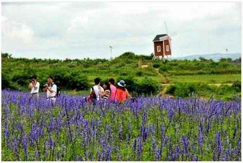 Jom Kita Lihat Keindahan Taman Lavender Seluas 100 Hektar di China