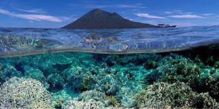 terumbu-karang-bunaken