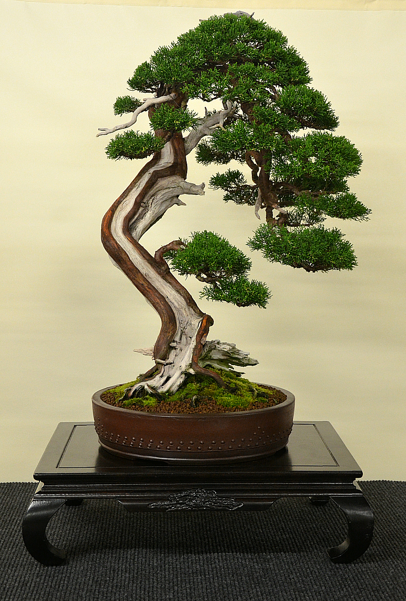 Bonsai Living Art International Bonsai And Kusamono Exhibition