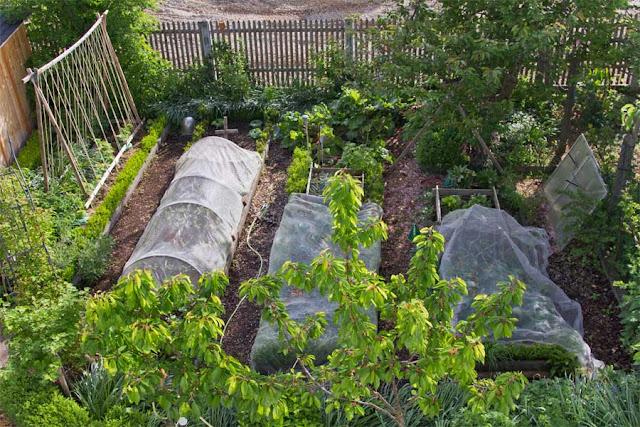 Bio-Gemüsegarten im Mai