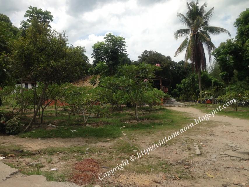 pokok kemboja ditanam di pulau besar