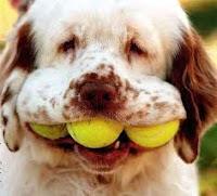 dog tennis balls mouth