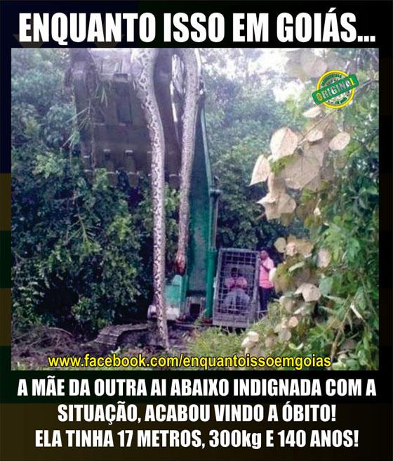 MOTIVACIONAIS: Enquanto isso em Goiás... - Cobra;morta;guindaste;imagens