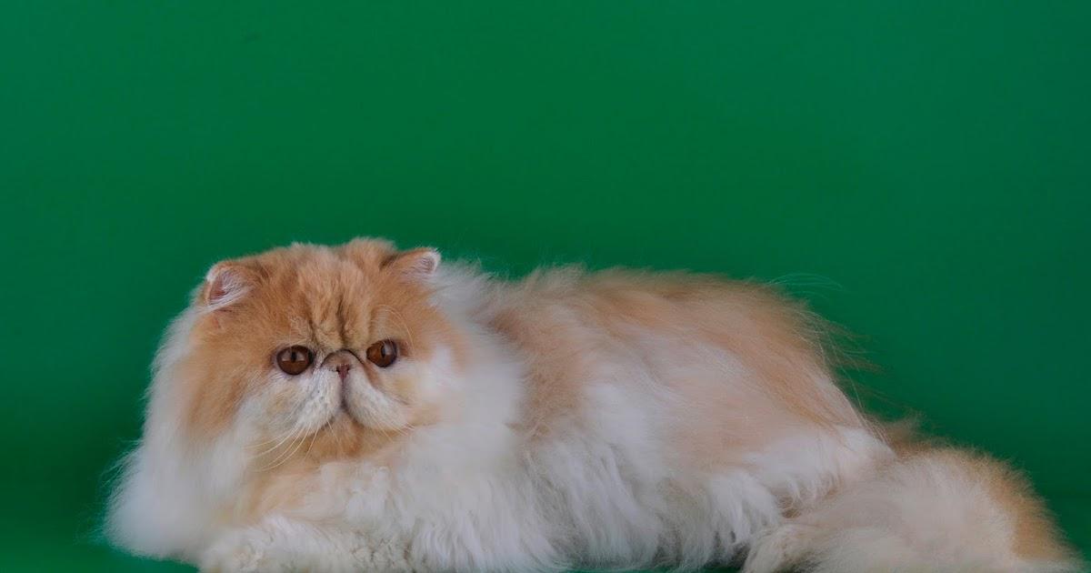 Cat Games - Y8.COM