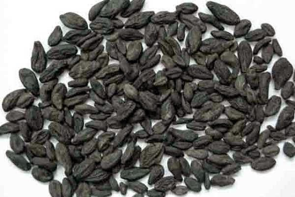 Black Myrobalan for Male Yeast Infection