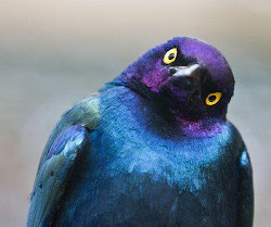 Love this birds face