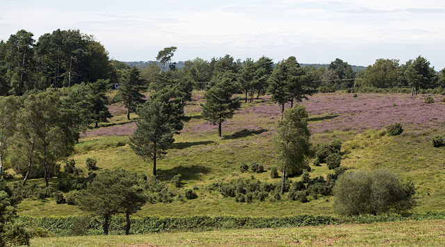 View over the Forest from near a car park called Lodge.  Ashdown Forest, 17 August 2012.