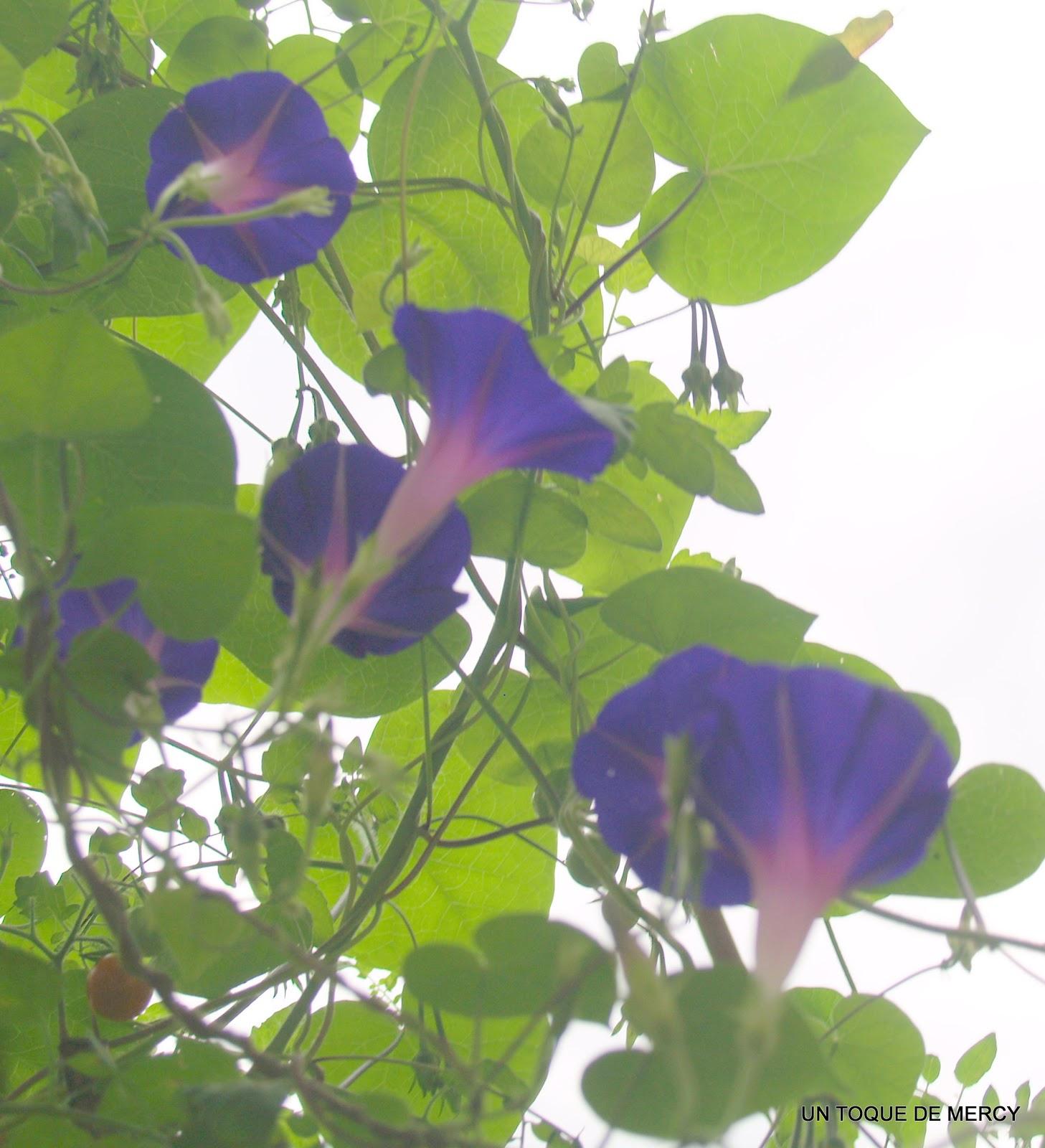 Un toque de mercy flores de mi jardin practico la - Un jardin para mi ...