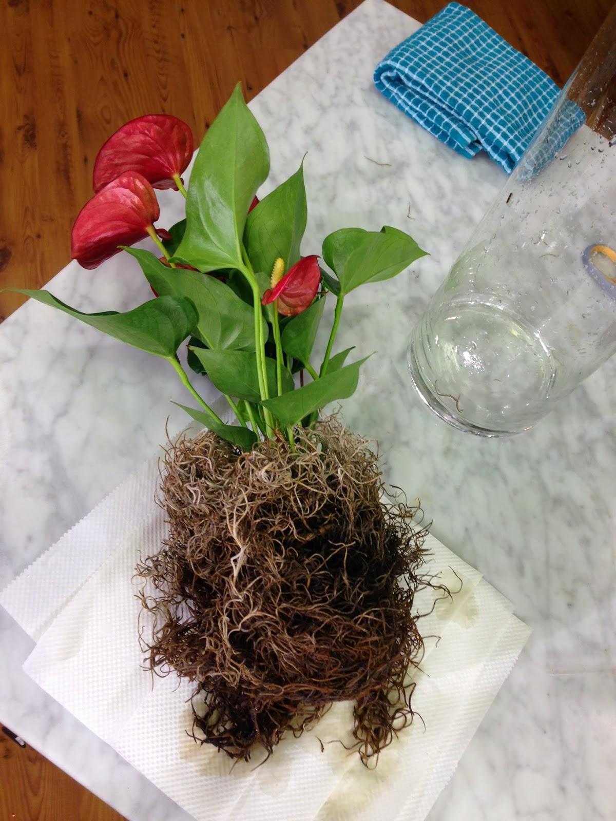 Chris h olsen online blog valentine beta fish gift ribbon reviewsmspy