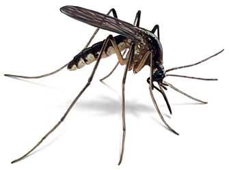 Como matar mosquitos mas facil y practico...