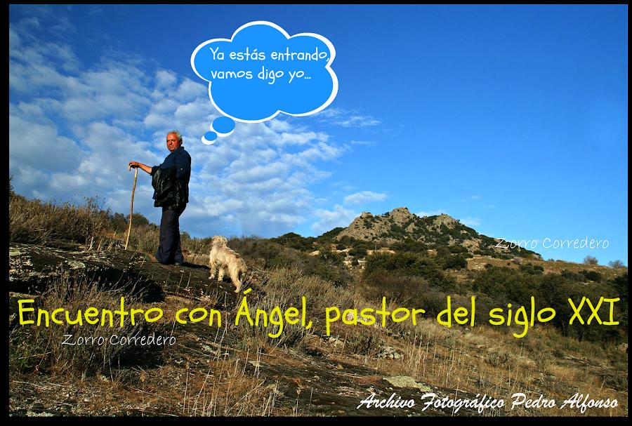 Ángel, pastor del XXI