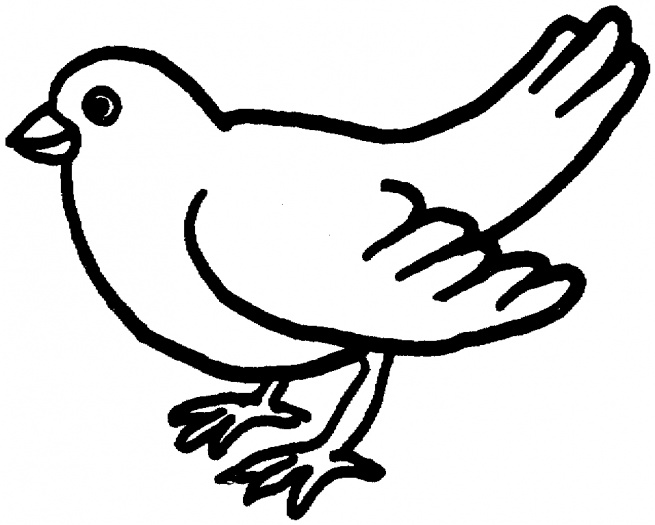 animal coloring pages bird coloring pages