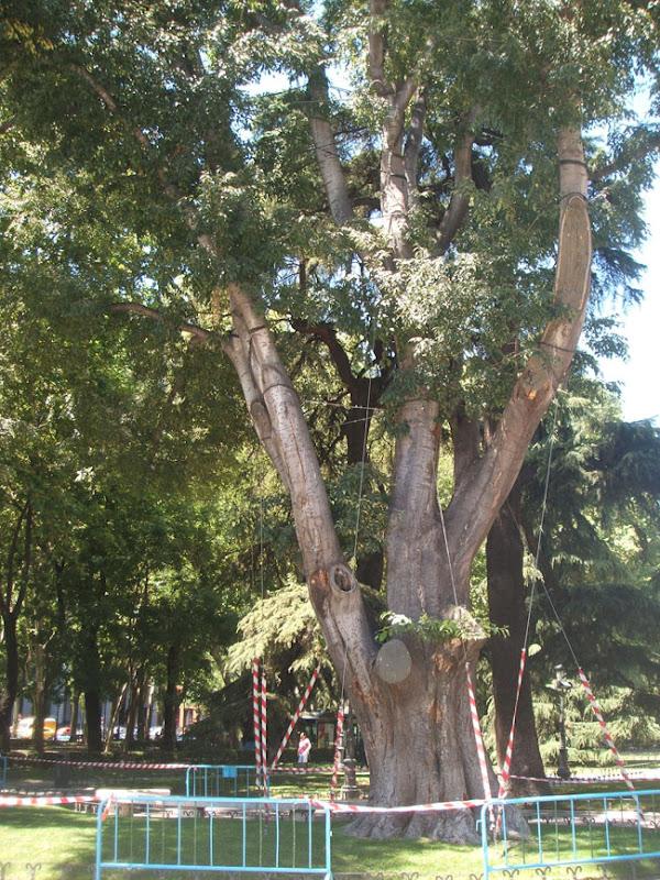 Real jard n bot nico de madrid paisaje libre for Como ir al jardin botanico