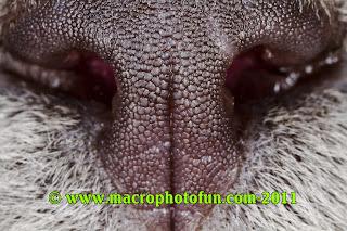 feline (domesticated house cat) nose