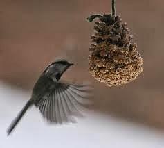 Bird Feeders, winter birds, feeding birds at winter