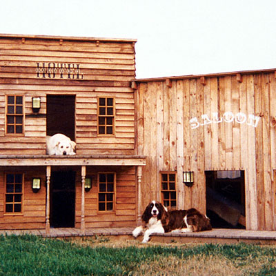 funny dogs houses wild west town pictures photography beautiful dog houses