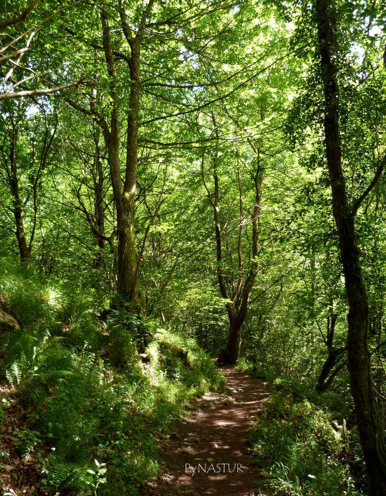 Bosque de Las Xanas