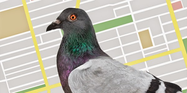 Google Pigeon Update Aimed At Improving Local Search Results