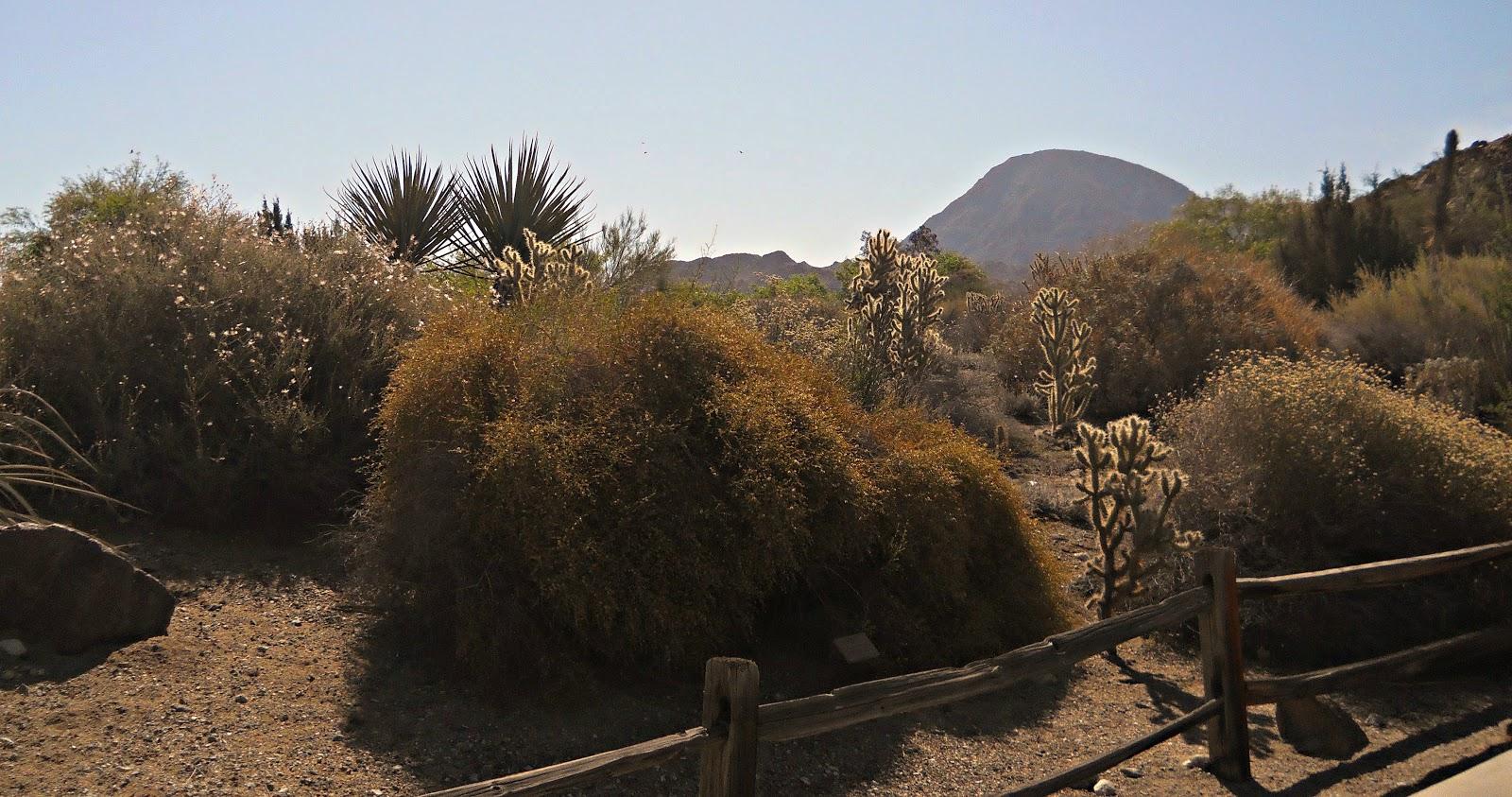 The Living Desert in Palm Desert, California - ButterflyInTheAttic