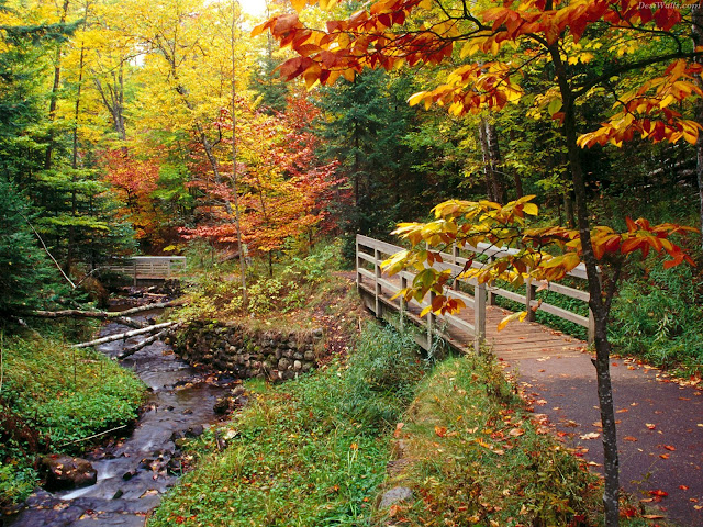Northern Michigan, Upper Peninsula, fall, autumn, forest, Munising Falls