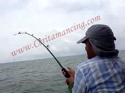 疯狂钓鱼得到的怪物黄貂鱼 Monster Stingray