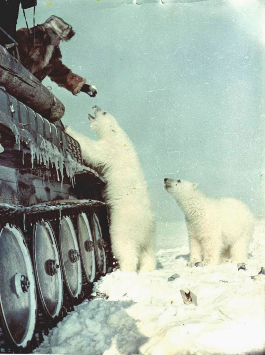 The soldiers fed the polar bears with condensed milk tins.