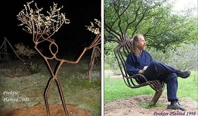 pohon-pohon berbentuk unik