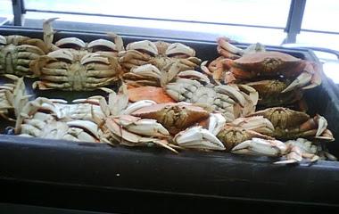 San Fransisco Crabs