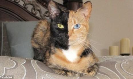 Gambar Kucing Bercorak Aneh