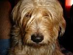 perro phantron