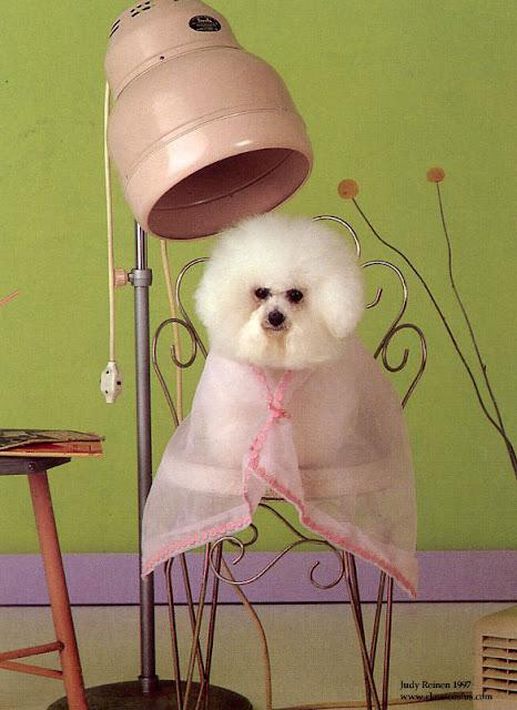 san antonio dog groomers