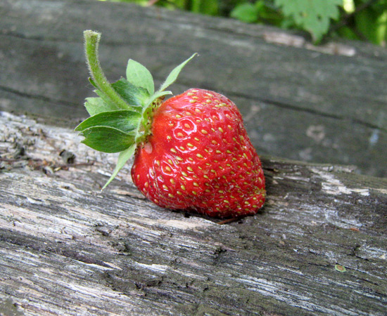 Клубника, Strawberry