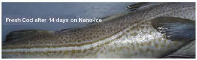 Kualitas Ikan Pasca Nano- Ice