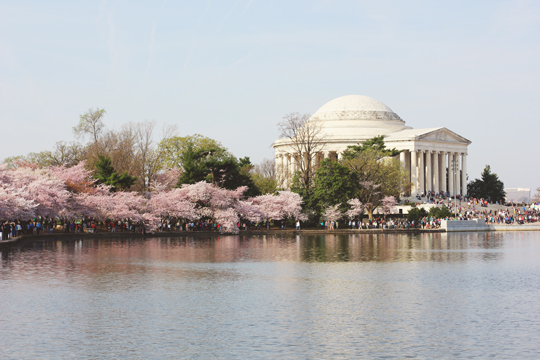Thomas Jefferson Memorial and cherry blossoms in Washington, DC