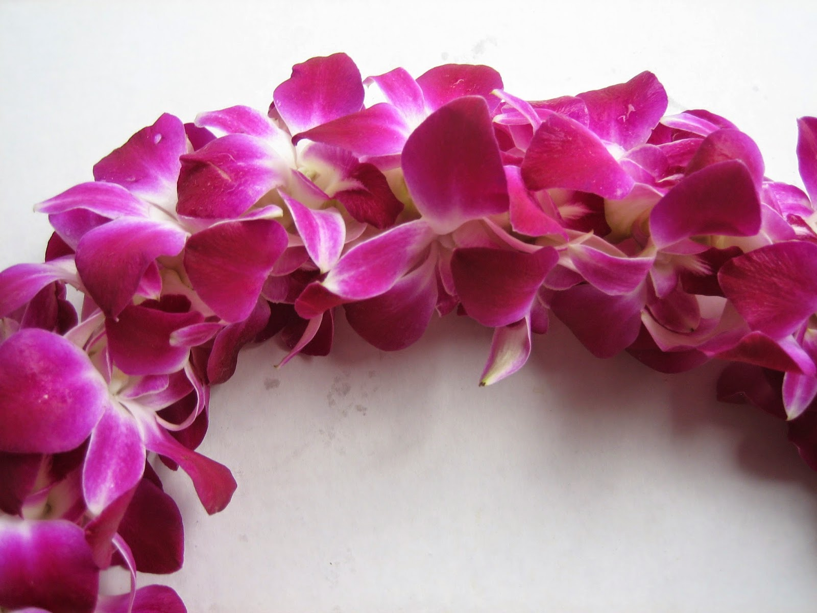 Orchid Leis For Graduation | Information Brought To You From ...