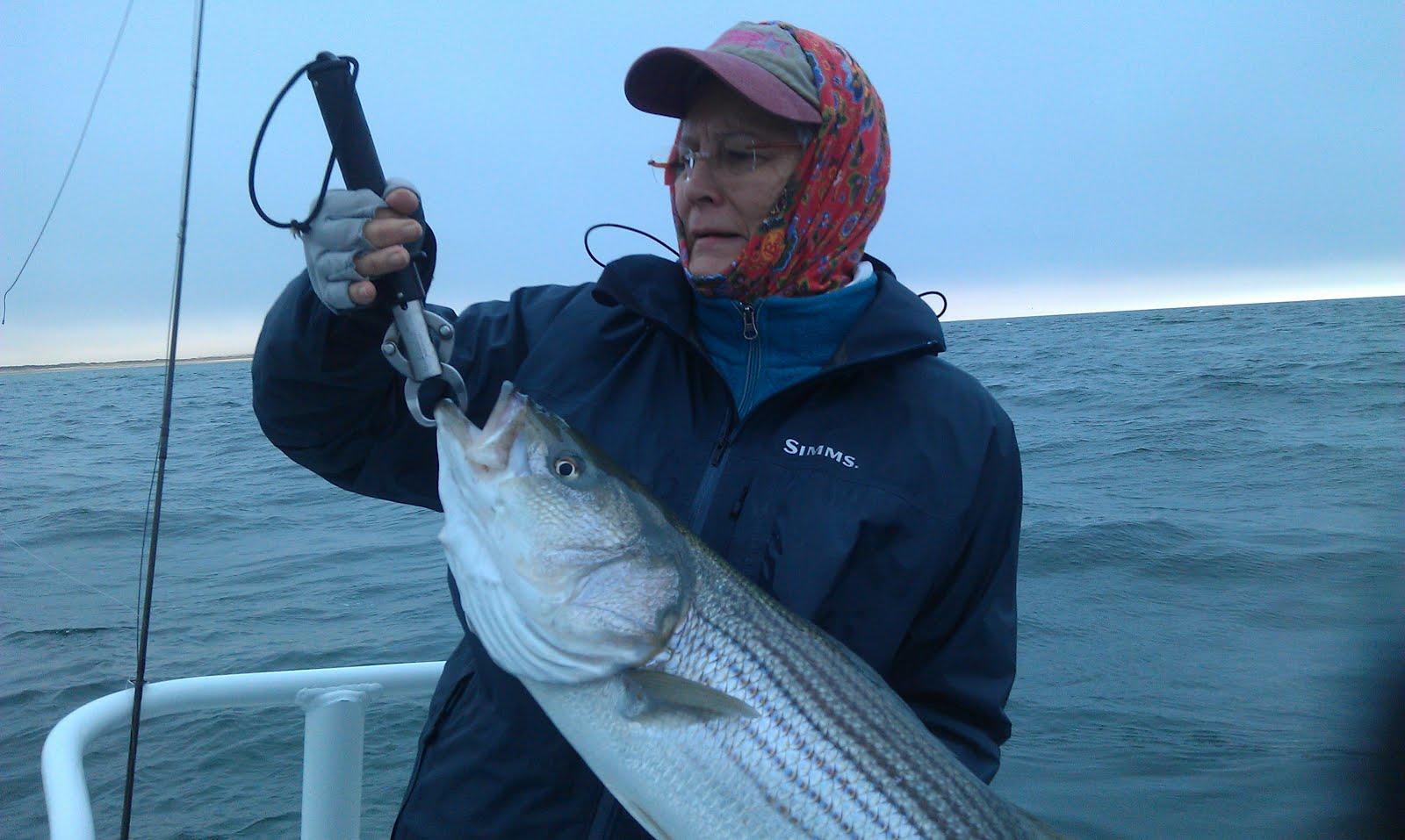 Maine striped bass fishing early season striped bass for Maine bass fishing