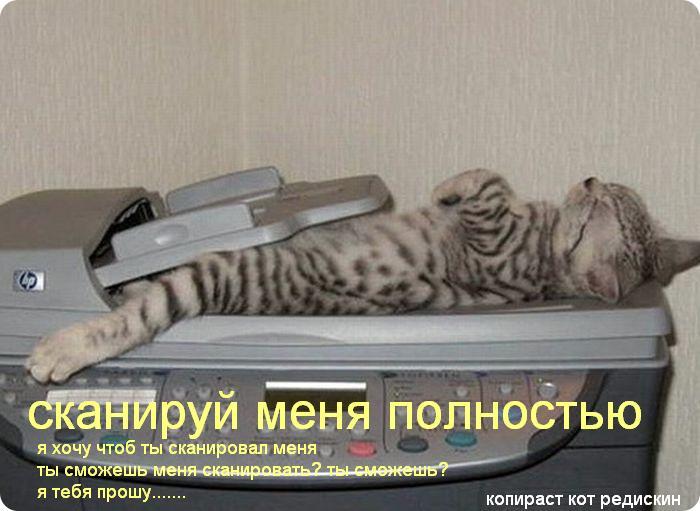 Кот: сканируй меня полностью