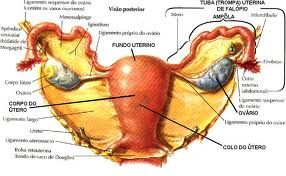 Vivendo com cancer de ovario