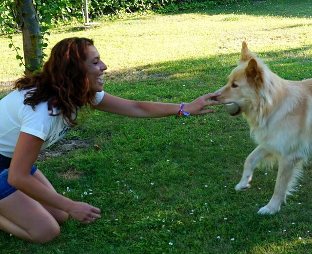 enseñar jugar perro