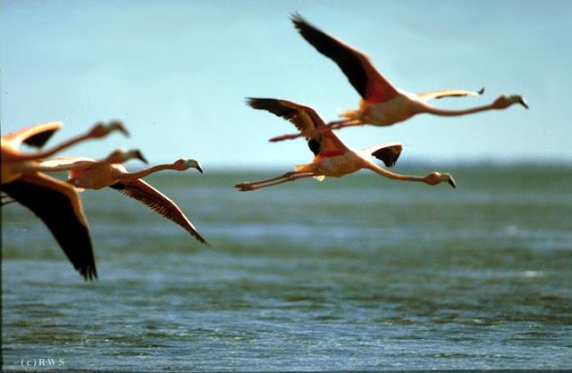 நான் பார்த்து ரசித்த புகைப்படங்கள் சில.... - Page 2 Flying+Birds+%252815%2529