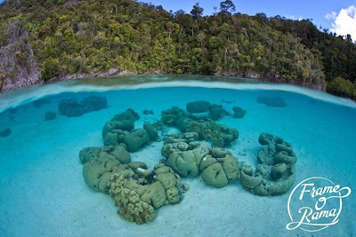 "<a href=""http://mataram.info/things-to-do-in-bali/visitindonesia-banda-marine-life-the-paradise-of-diving-topographic-point-inward-fundamental-maluku/"">Indonesia</a>best destinations : Dream Destination: Raja Ampat Amongst #Frameorama"